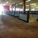 The indoor paddock at Pimlico