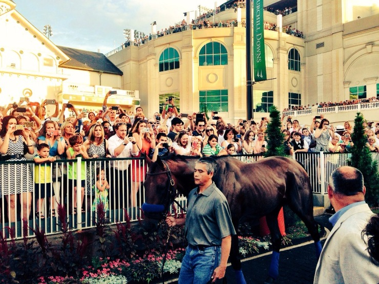 American Pharoah in the Churchill Downs paddock (John Cox photo)